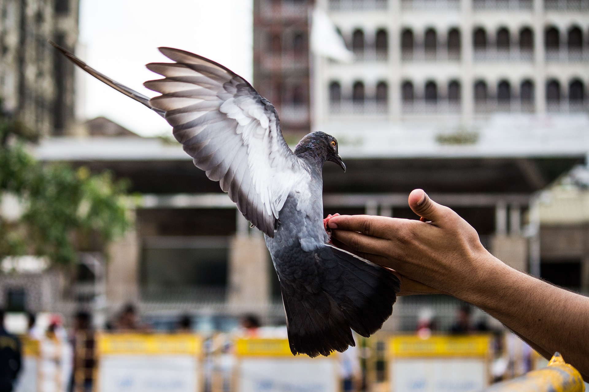 don't feed pigeons in singapore