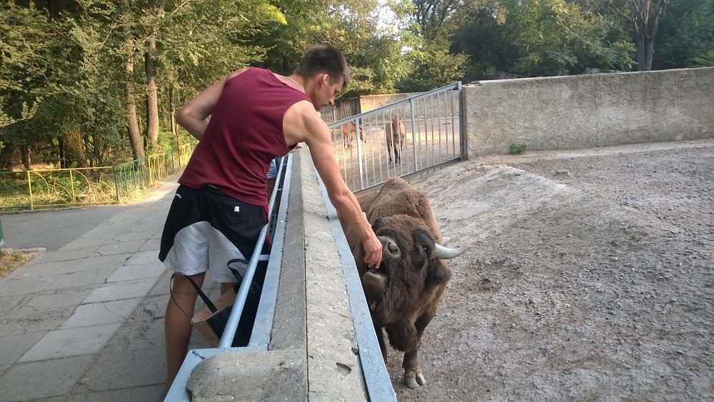odessa zoo ukraine zubr bison