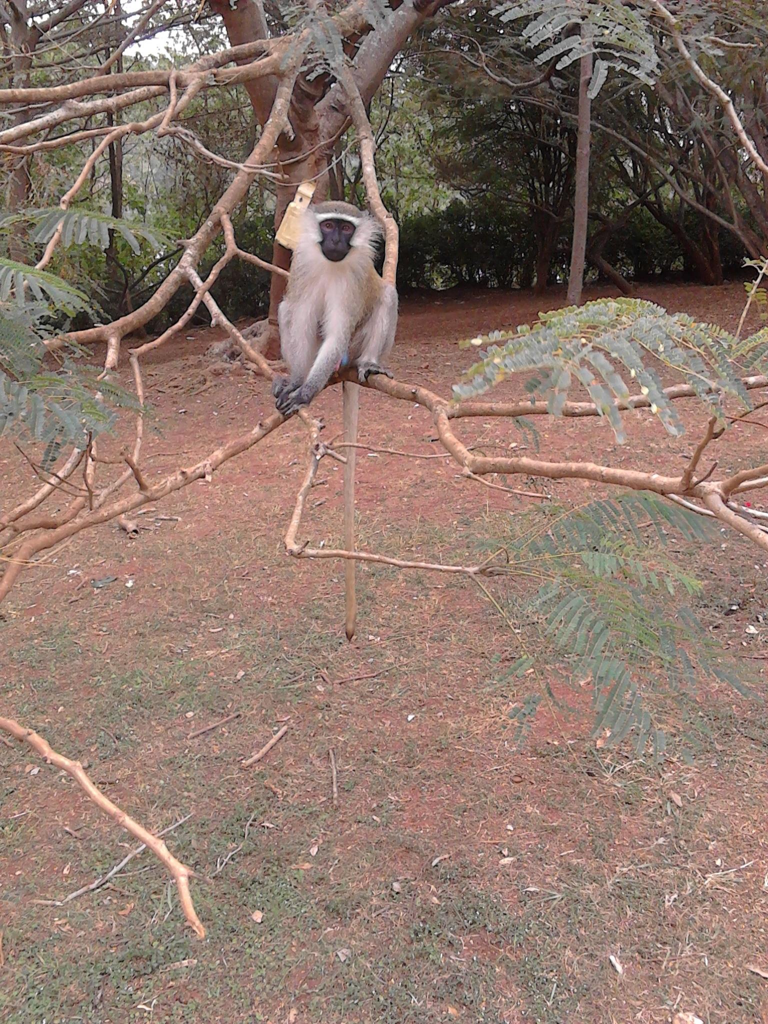 monkey in jinja uganda