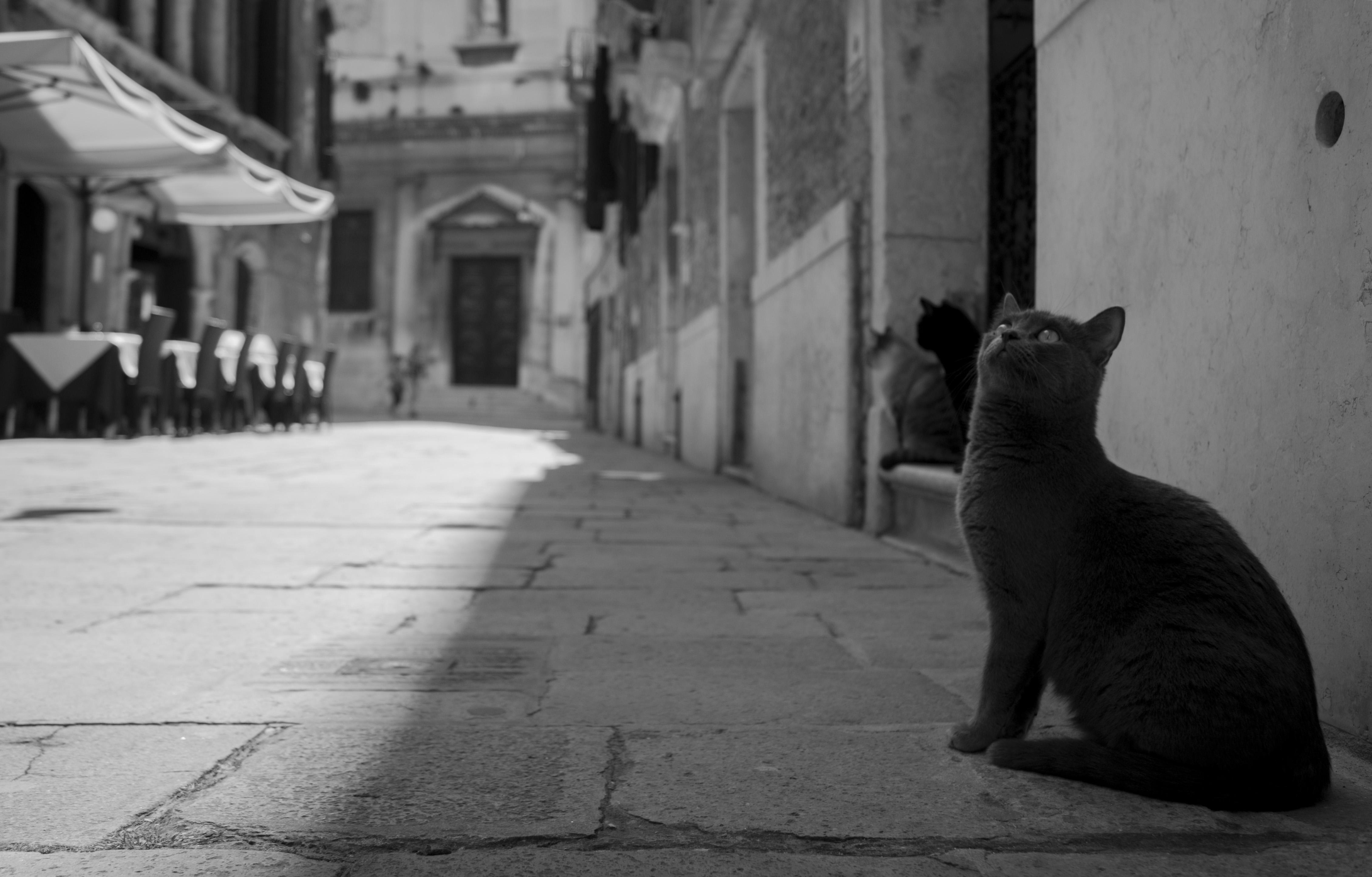 Venice, Italy (Venezia (Italia)
