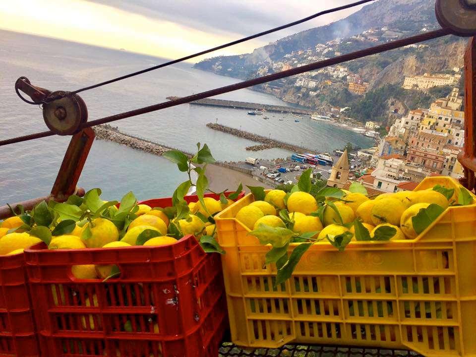 Amalfi coast, Italy, lemons, limoni
