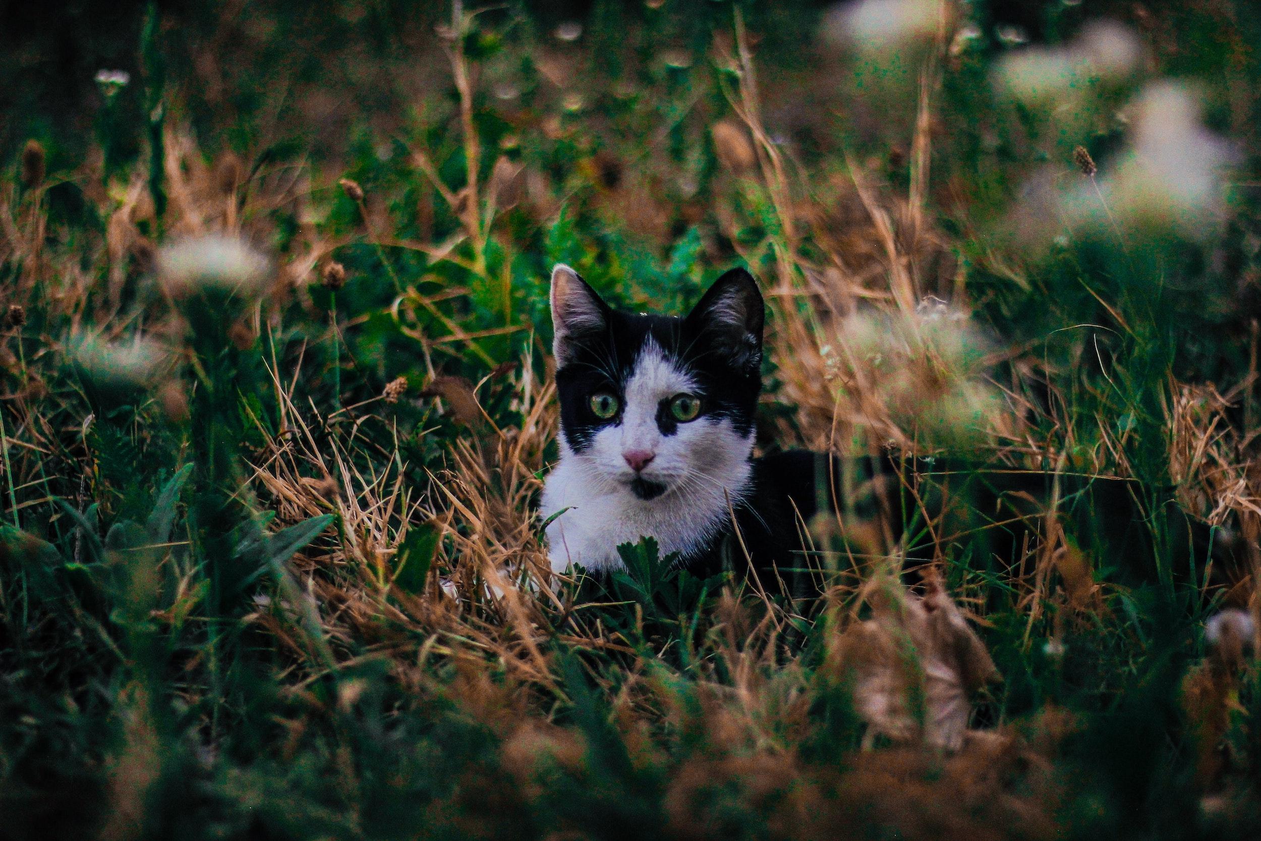 Photo byElion JasharionUnsplash | A curious cat in Šar mountains, North Macedonia